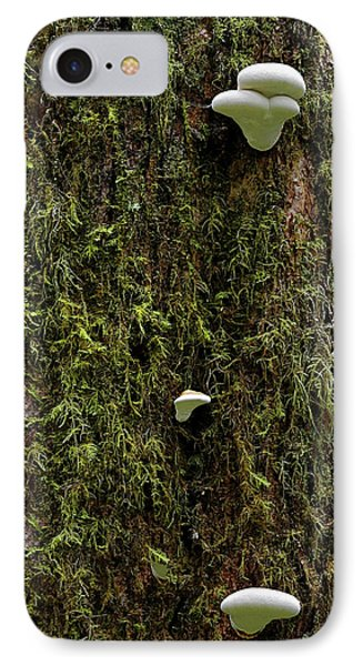 White Mushrooms - Quinault Temperate Rain Forest - Olympic Peninsula Wa Phone Case by Christine Till