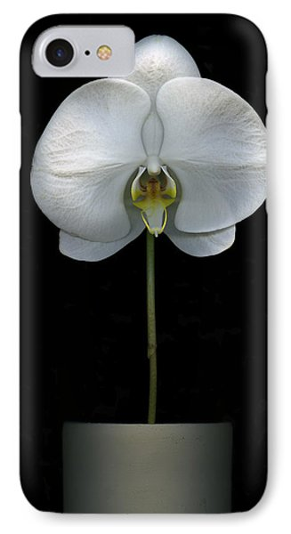 White Orchid In A Pot IPhone Case by Christian Slanec