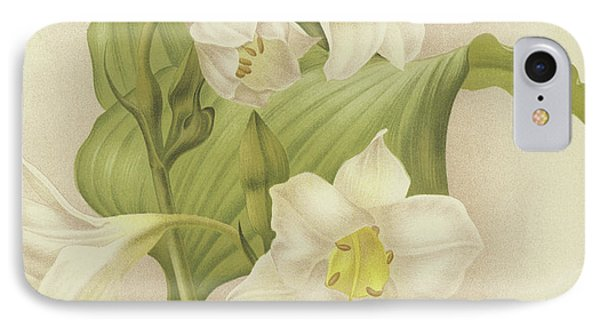 White Orchids   Eucharis Sanderiana IPhone Case by English School