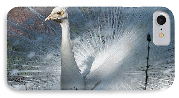 White Peacock IPhone Case by Lamarre Labadie