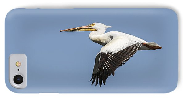 White Pelican 4-2015 IPhone Case by Thomas Young