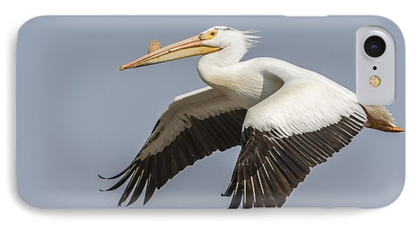 White Pelican 5-2015 IPhone Case by Thomas Young