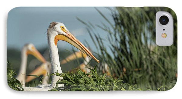 White Pelican 7-2015 IPhone Case by Thomas Young