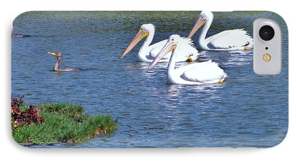 White Pelicans IPhone Case