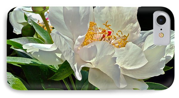 White Peony IPhone Case by Janis Nussbaum Senungetuk
