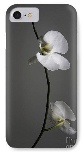 White Phalaenopsis Orchid IPhone Case by Diane Diederich