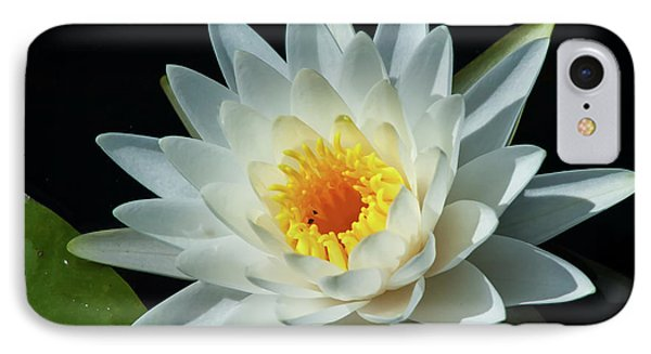 IPhone Case featuring the photograph White Pond Lily by Arthur Dodd