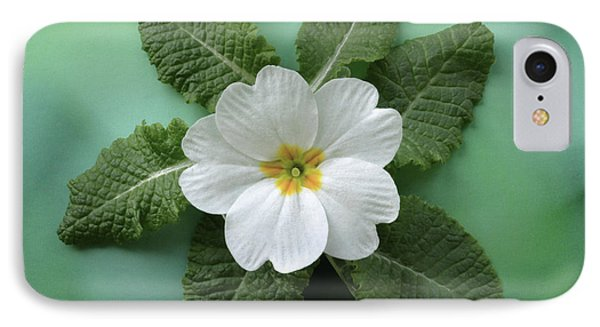 IPhone Case featuring the photograph White Primrose by Terence Davis