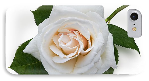 White Rose IPhone Case by Jane McIlroy