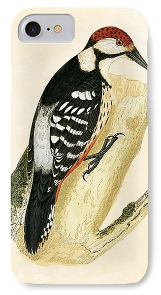 White Rumped Woodpecker IPhone 7 Case by English School