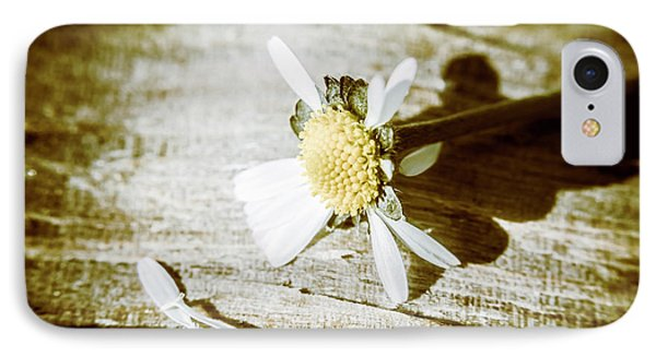 White Summer Daisy Denuded Of Its Petals IPhone Case by Jorgo Photography - Wall Art Gallery