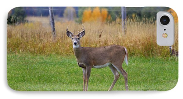 IPhone Case featuring the photograph White Tail Dear  by Irina Hays