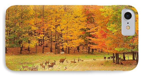 White Tail Deer Herd IPhone Case by Terri Gostola
