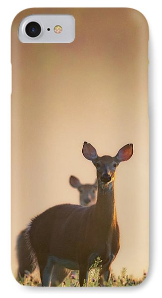 White-tailed Deer 2016 IPhone Case