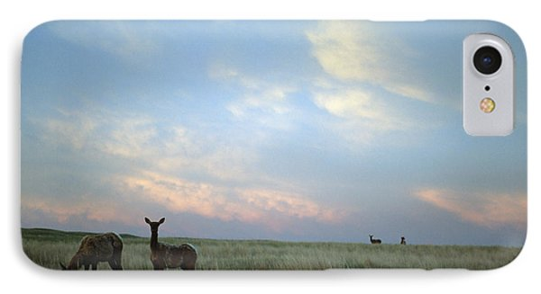White-tailed Deer On The Prairie IPhone 7 Case