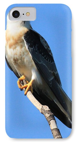 White-tailed Kite IPhone Case by Paul Marto