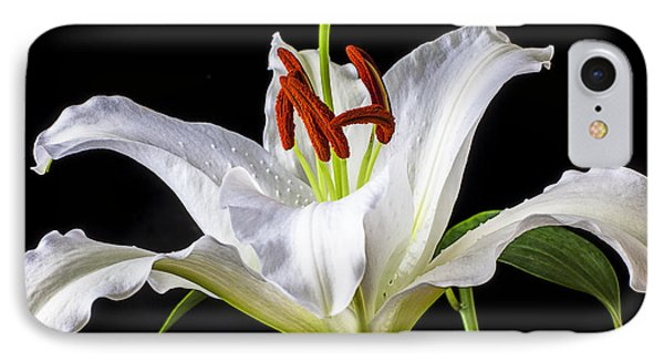 White Tiger Lily Still Life IPhone Case by Garry Gay