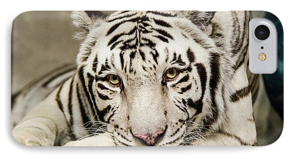 White Tiger Looking At You IPhone Case