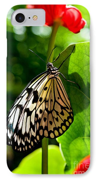 White Tree Nymph Butterfly 1 IPhone Case by Terry Elniski