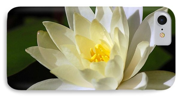 White Water Lily IPhone Case by Donna Bentley
