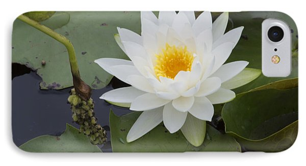 White Waterlily Phone Case by Linda Geiger