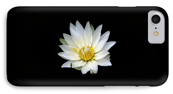 White Waterlily With Dewdrops IPhone Case by Rose Santuci-Sofranko