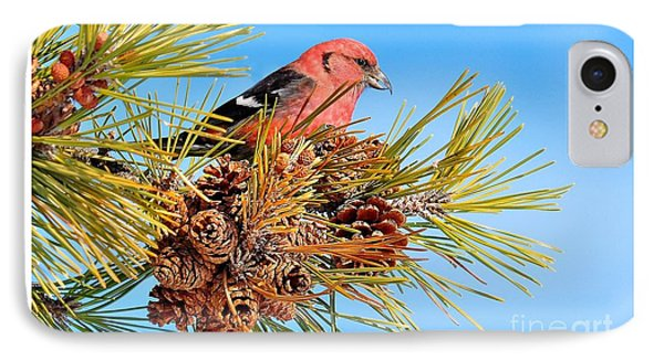 IPhone Case featuring the photograph White-winged Crossbill by Debbie Stahre