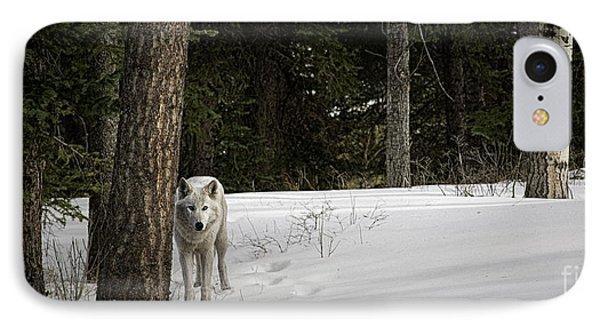 White Wolf IPhone Case by Brad Allen Fine Art