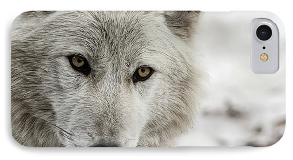 White Wolf II IPhone Case by Brad Allen Fine Art
