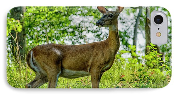 IPhone Case featuring the photograph Whitetail Deer  by Thomas R Fletcher