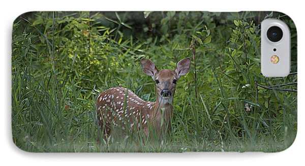 Whitetail Fawn 20120711_37a IPhone Case by Tina Hopkins
