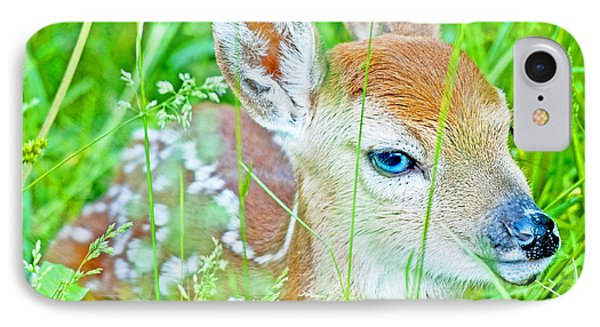 IPhone Case featuring the photograph Whitetailed Deer Fawn by A Gurmankin