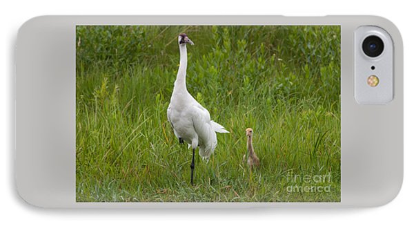 Whooping Crane And Chick IPhone Case by Scott Nelson