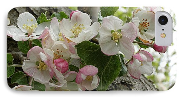 IPhone Case featuring the photograph Wild Apple Blossoms by Angie Rea