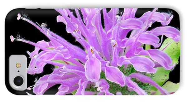 Wild Bergamot Also Known As Bee Balm IPhone Case by Jim Hughes