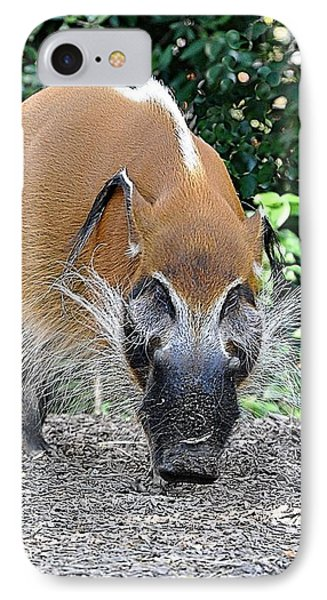 Wild Boar Phone Case by Jan Amiss Photography