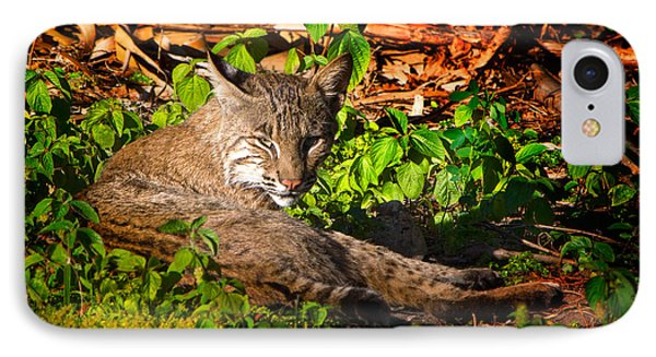 Wild Bobcat At Sunset IPhone Case by Mark Andrew Thomas