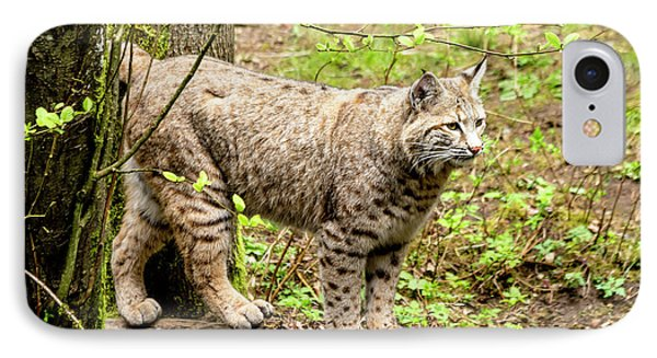 Wild Bobcat IPhone Case by Teri Virbickis