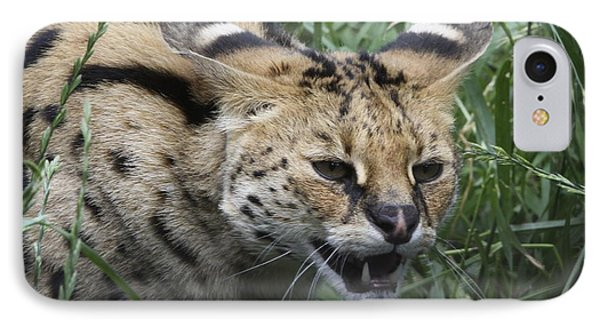 Wild Cat IPhone Case by Gary Bridger