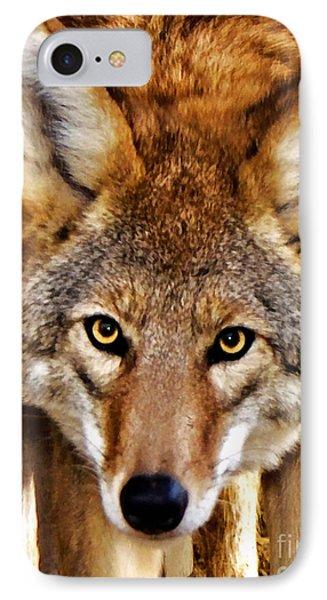 Wild Coyote IPhone Case by Adam Olsen