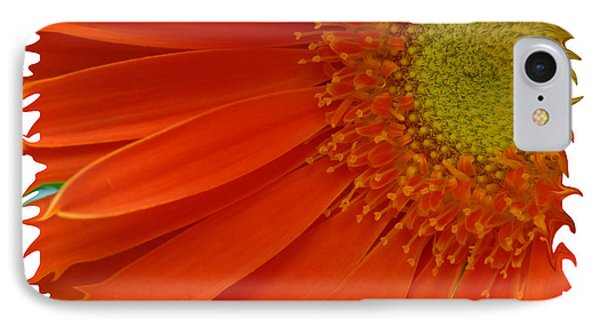 IPhone Case featuring the photograph Wild Daisy by Shari Jardina