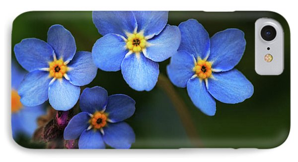 Wild Flower Forget-me-not Since The Middle Ages Symbolizes The Celestial Eye And Reminds You Of God IPhone Case