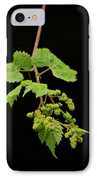 Wild Grapes 1995 Phone Case by Michael Peychich