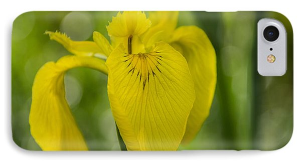Wild Iris IPhone Case by Randy Bayne