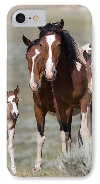 Wild Pinto Family Phone Case by Carol Walker