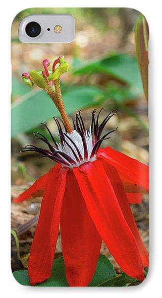Wild Red Passion Flower IPhone Case by Yuka Ogava