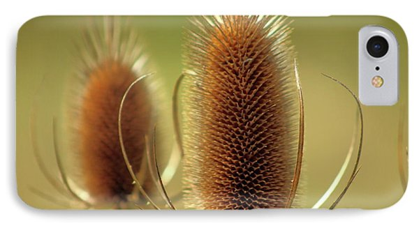 Wild Teasel IPhone Case by Bruce Patrick Smith