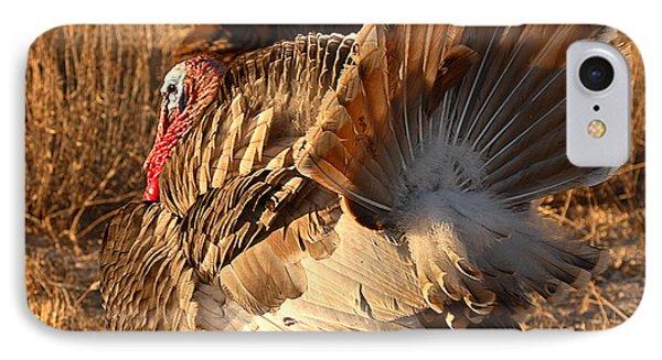 Wild Turkey Tom Following Hens Phone Case by Max Allen