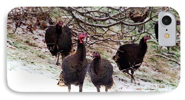 Wild Turkeys  IPhone Case by Jeff Swan