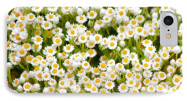 iPhone 7 Case - Wildflowers by Holly Kempe